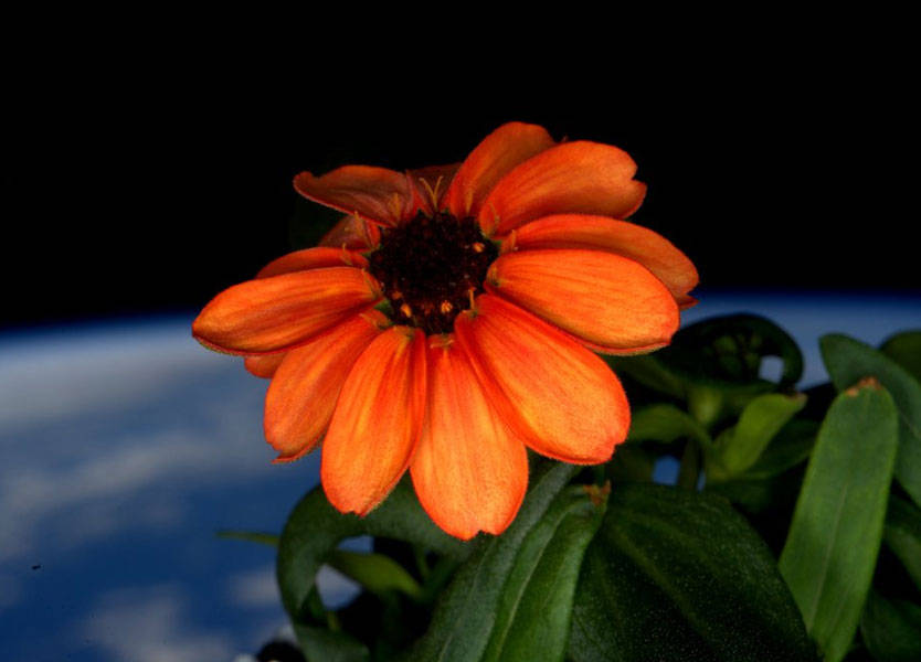 flower in space