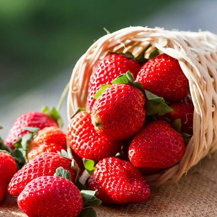 shutterstock 165452462 strawberries minicase